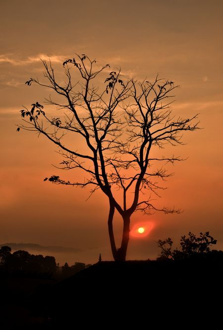 Sunset Tree Photo By Artist Praveen National Geographic Your Shot Landscape Photography Sunset Nature