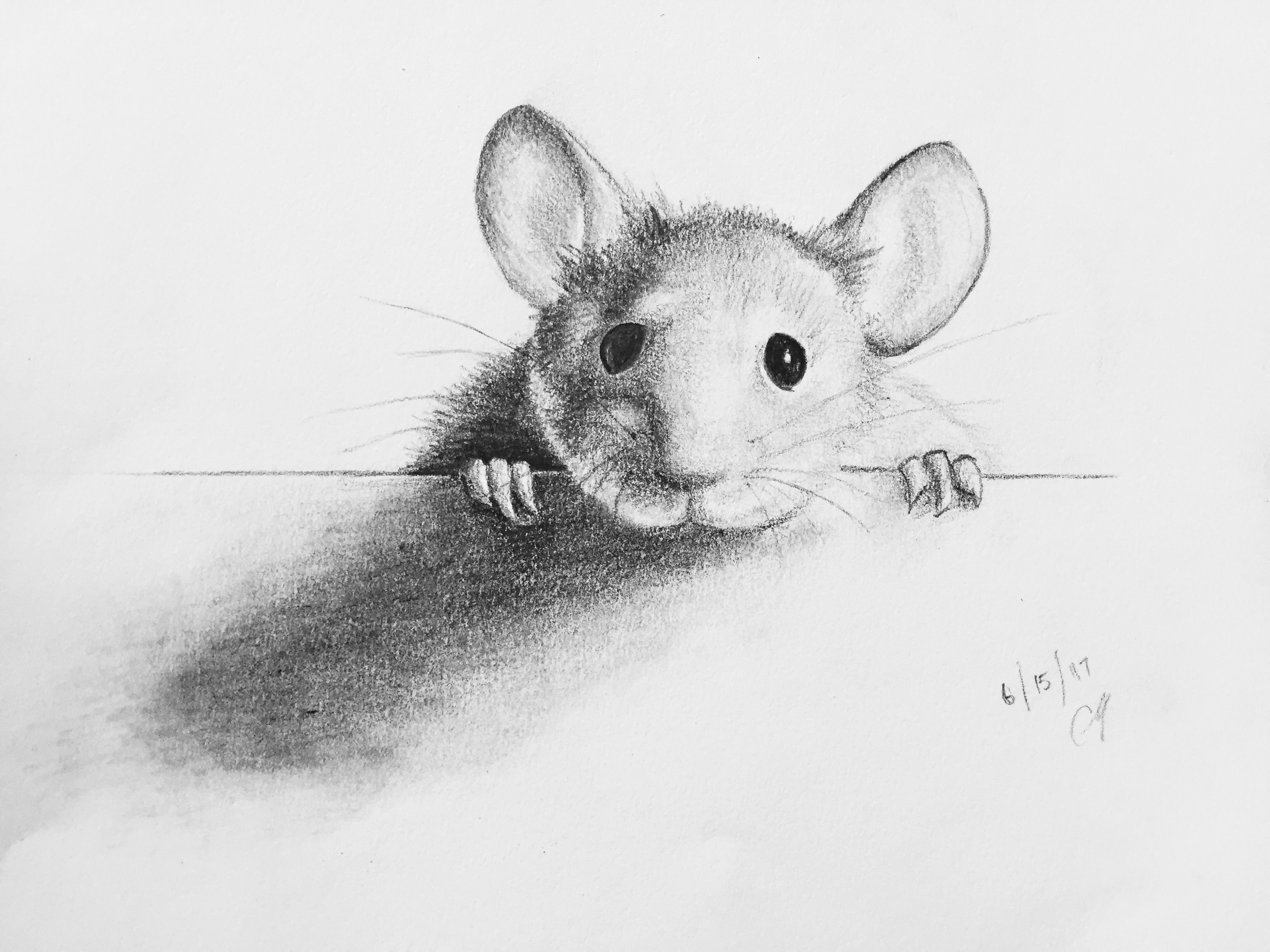 Pencil sketch of a mouse