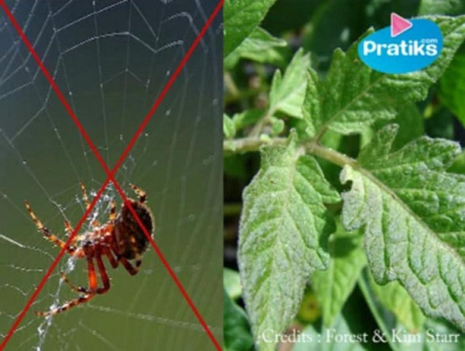 Les toiles d 39 araign es sont un des miracles de la nature for Araignees dans maison