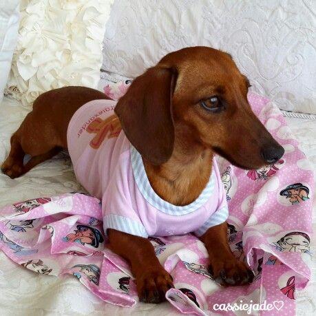 Peter Alexander Slinky Dachshund Dog Dachshund Lovers Weenie Dogs