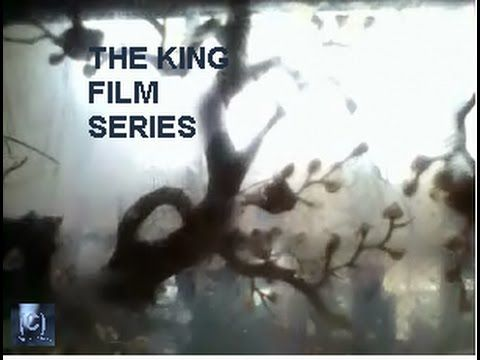 The KIN G Film Series: (C)copyright liz a kennedy..  The sog is from ACT...