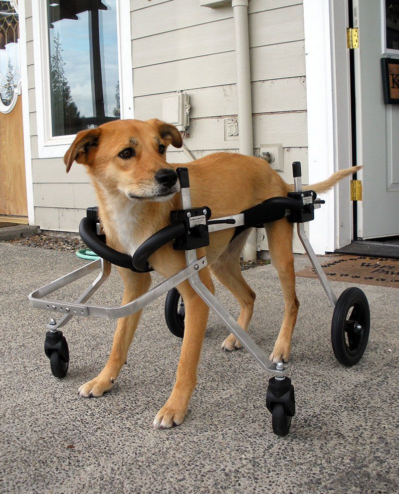 Rear Support Dog Wheelchair Rental | Sweeties wheelchair | Dog
