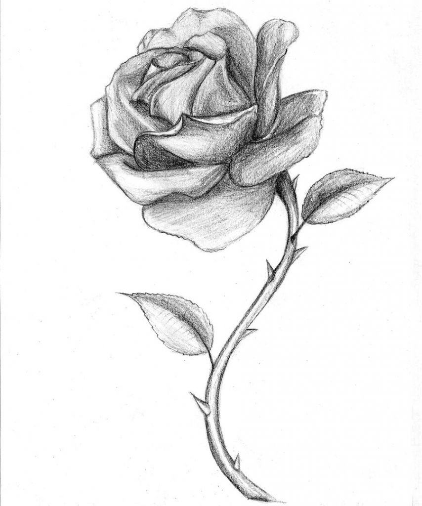 Black And White Drawings Of Roses Black And Red Roses Drawings ...