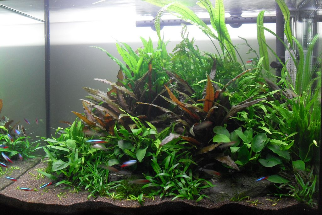 The Soil Substrate Or Dirted Planted Tank A How To Guide