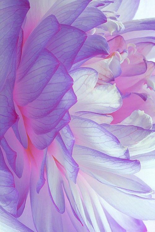 Pattern Flower Petals Flowers Purple Flowers Beautiful Flowers