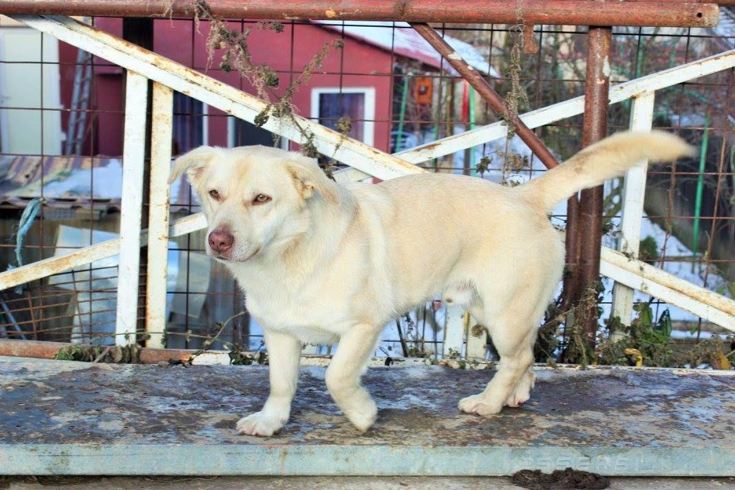 Tiere In Not Hundevermittlung Aus Dem Ausland Animals New Life Tiere In Not Hunde Vermittlung Hunde