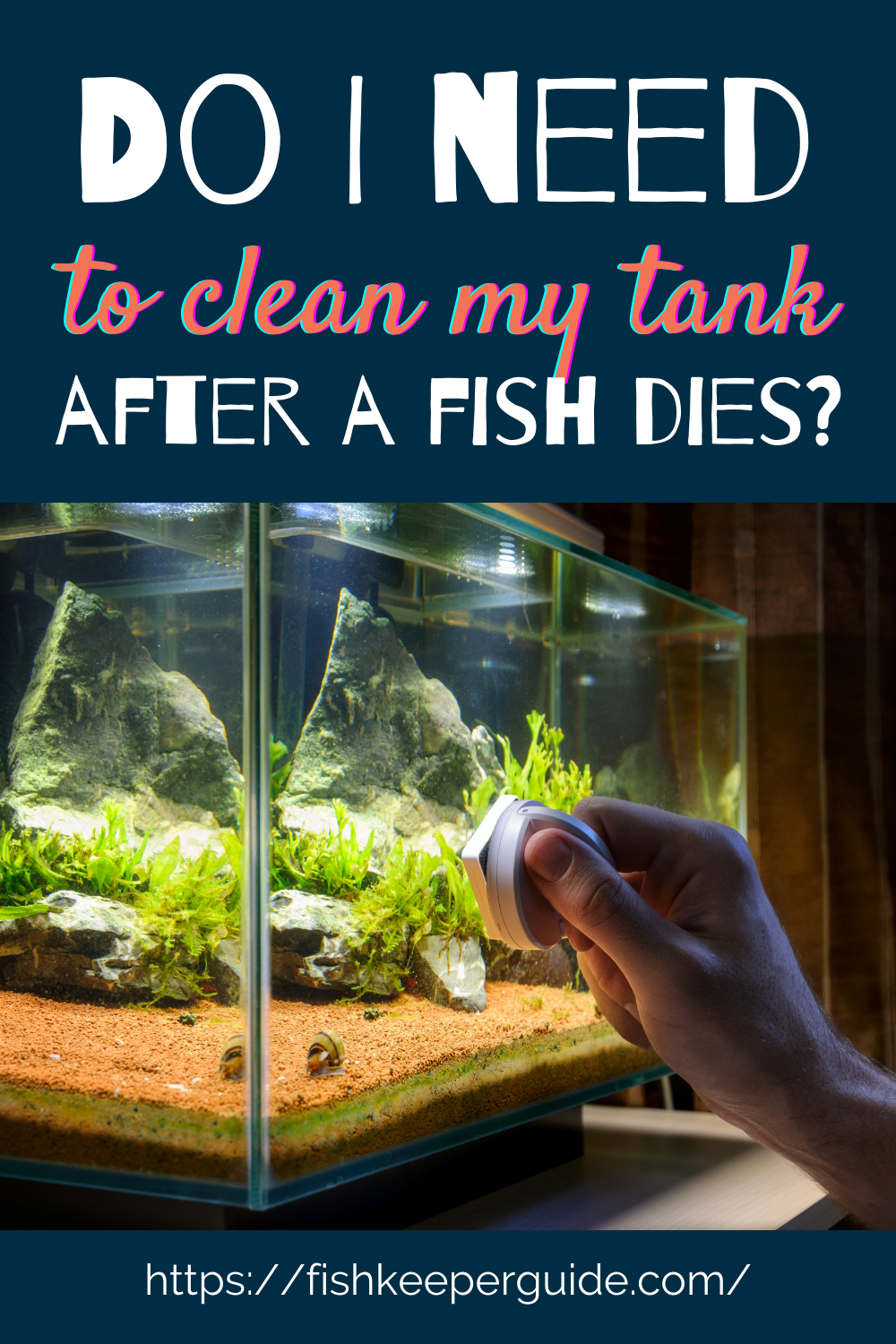 Do I Need To Clean My Tank After A Fish Dies In 2021 Fish Care Pet Fish Fish