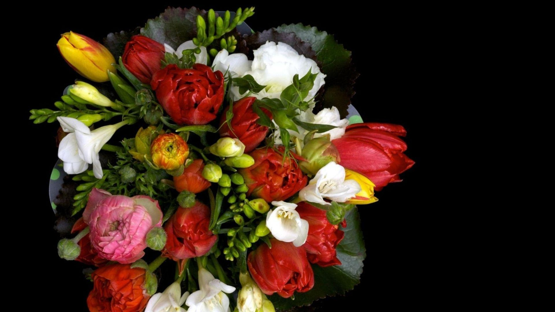 Ranunkulyus freesia flowers wallpapersu