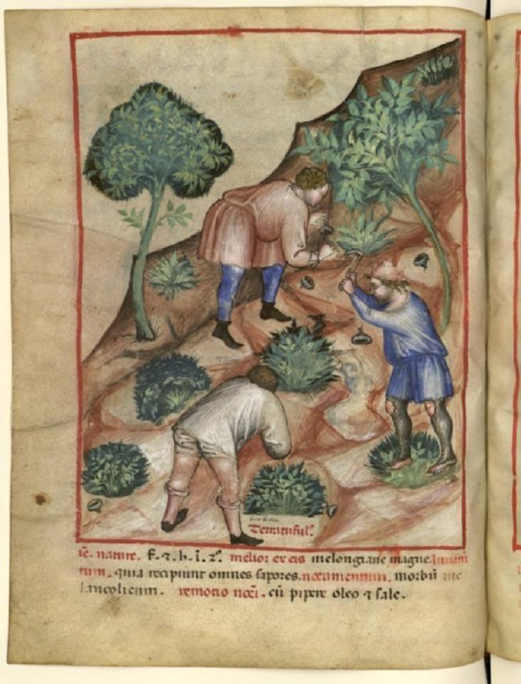Image result for medieval manuscript truffle
