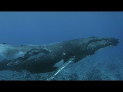 Swimming with whales is just a day in the office for marine - marine biologist job description