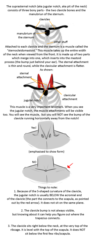 Anatomy Tip The Neck By Brainmatters Art References Art Reference Neck Anatomy