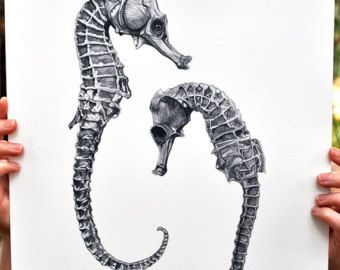 victorian drawing seahorse - Google Search