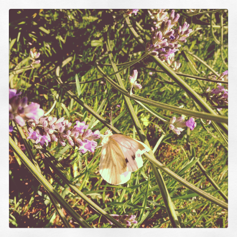 Bring back the sunshine and flutterbies www.olipolli.co.uk