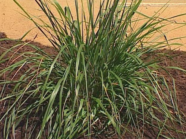 Low-Maintenance Plants for Easy Landscaping - Low-Maintenance Plants For Easy Landscaping Perennial Grasses, Low