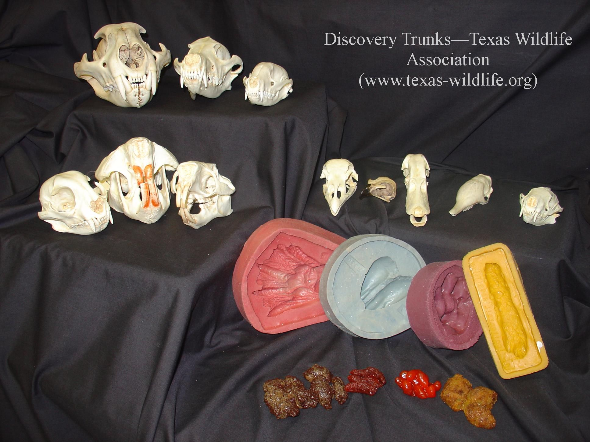 Teks Aligned K 6 Discovery Trunks Provide Hands On Natural