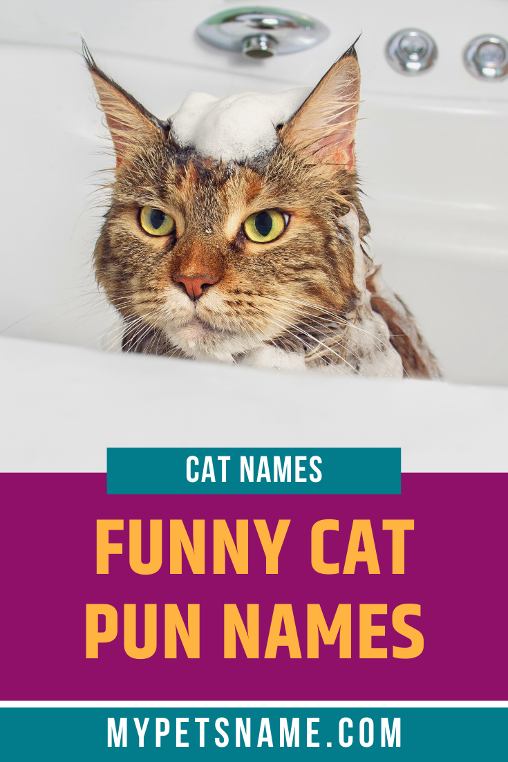 Pin on Funny Cats