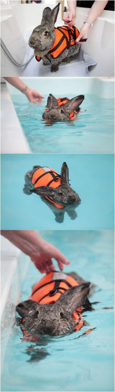 A rabbit swimming to relieve arthritis!