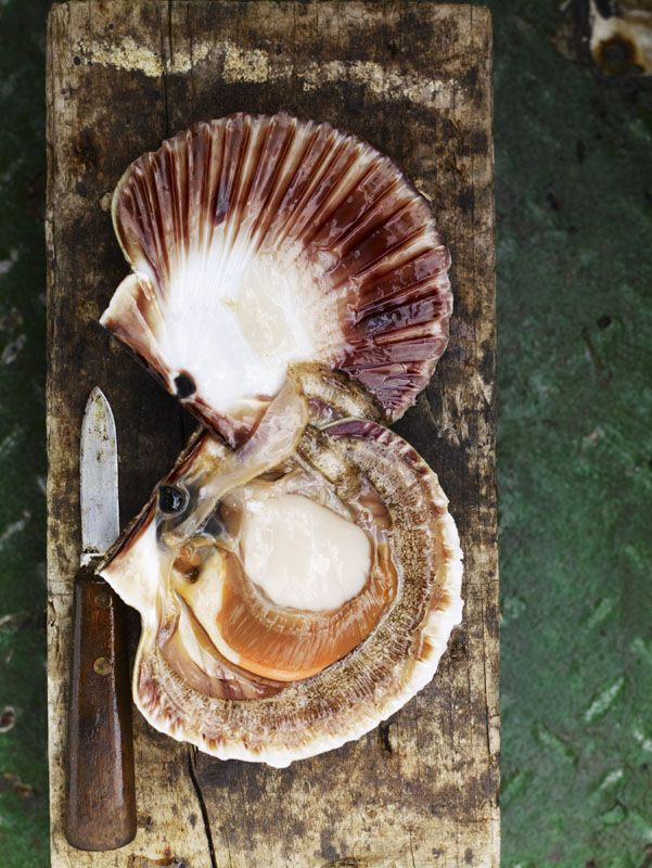 loch ewe scotland photography andrew montgomery ingredients photography fresh scallops food photography styling pinterest
