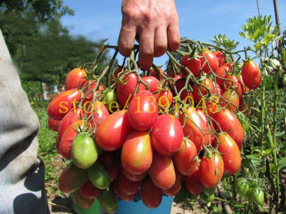 Semi di pomodoro 200 pz cherry pomodoro semi bonsai semi di ortaggi rari semi per la casa e giardino semina