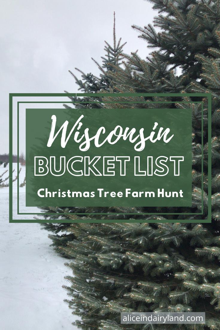 Wisconsin Bucket List Christmas Tree Farm Hunt In 2020 Christmas Tree Farm Tree Farms Christmas Tree