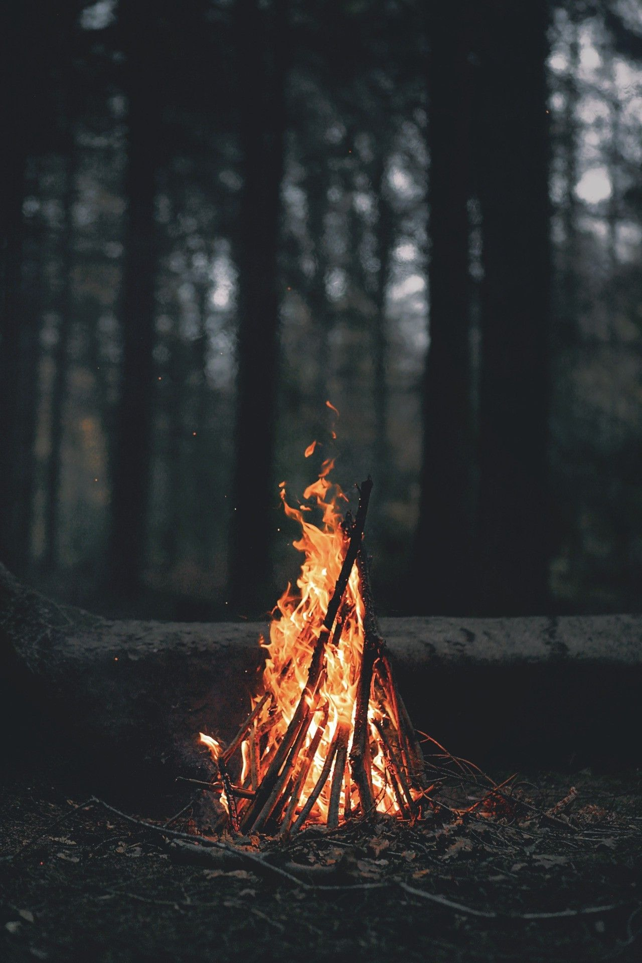 Portrait Display Nature Trees Forest Fire Wood Leaves Dark Evening Branch Bonfires Wallpaper Nature Photography Camping Photography Nature