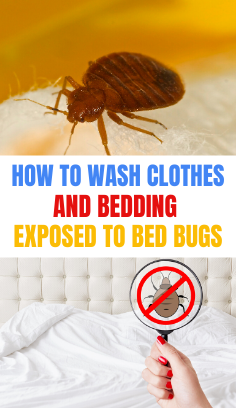 How to wash clothes and bedding exposed to bed bugs in