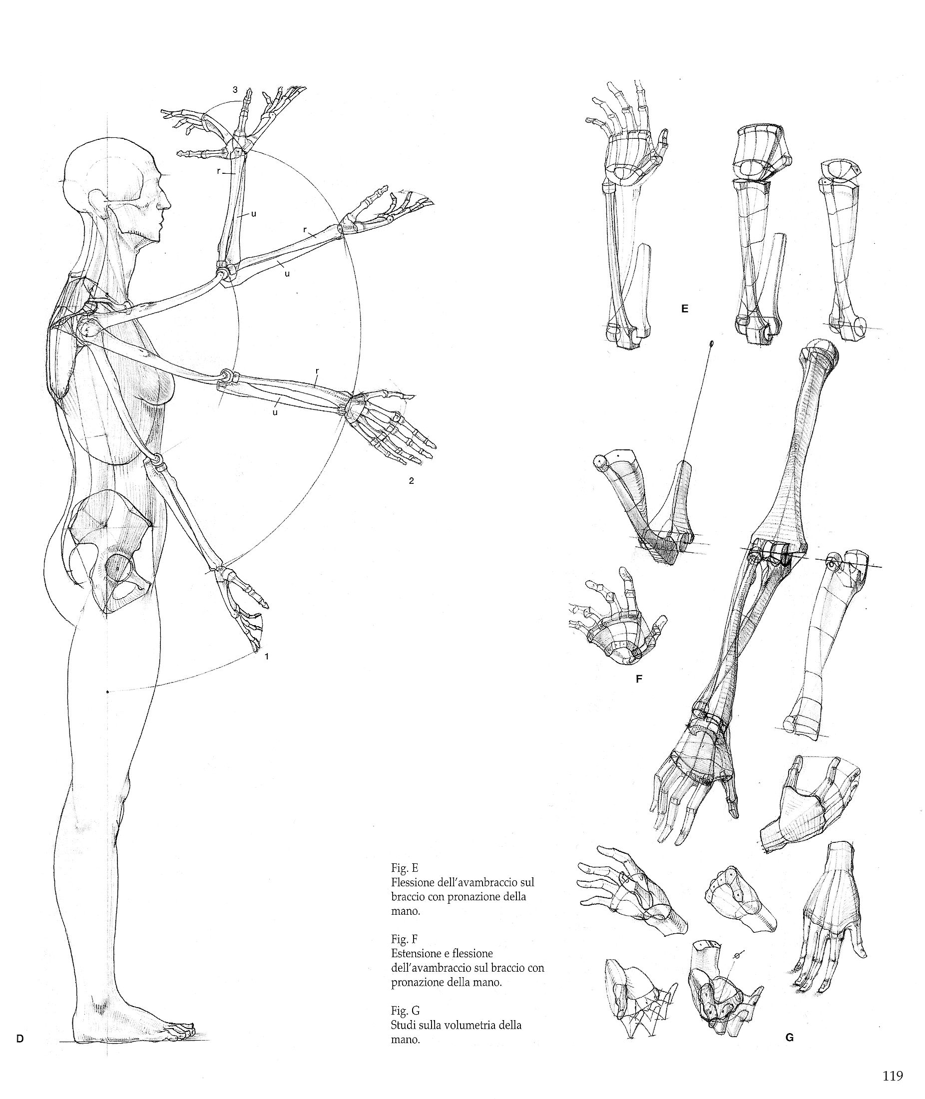 Pin von Character Design References auf Character Anatomy | Bones ...