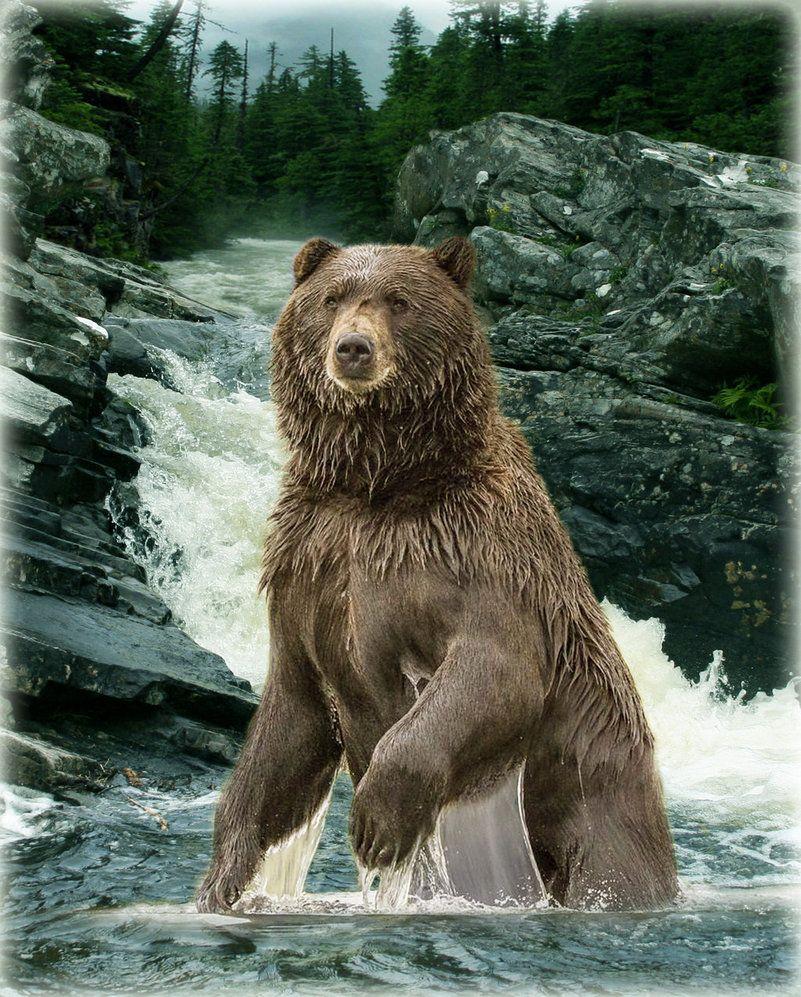 Die macht von grizzly von bushido78 with images