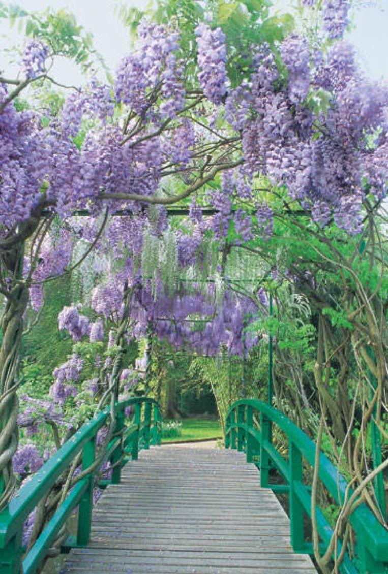 Blauregen, Haus Und Garten, Schöne Bilder, Balkon, Landschaften, Pflanzen,  Malerei, Blumen, Wohnen