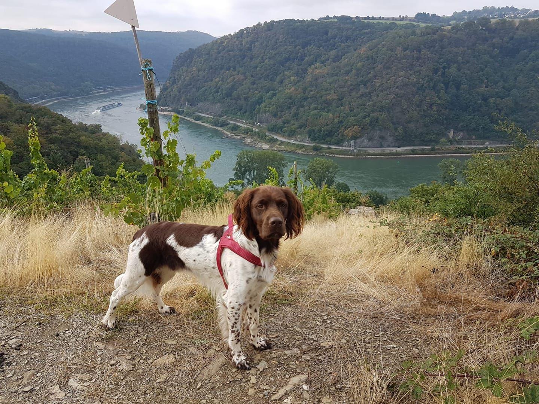 Pin Auf Urlaub Mit Hund