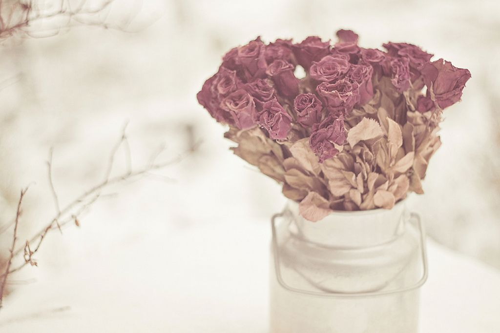 Fill my heart with winter roses.