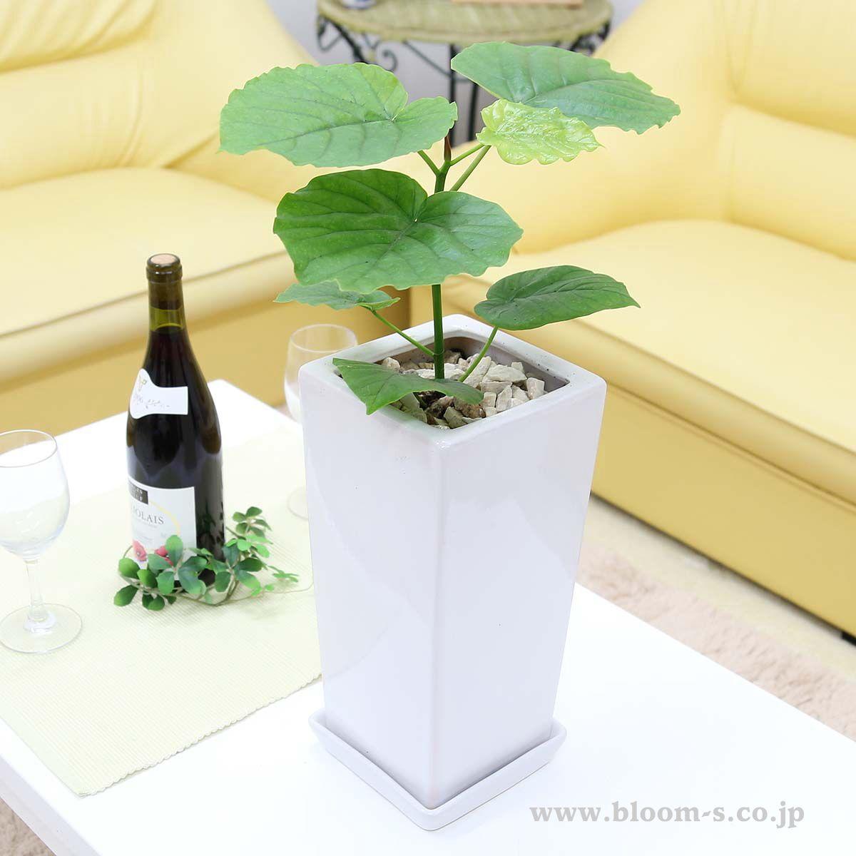 ボード Green Interior 観葉植物 のピン