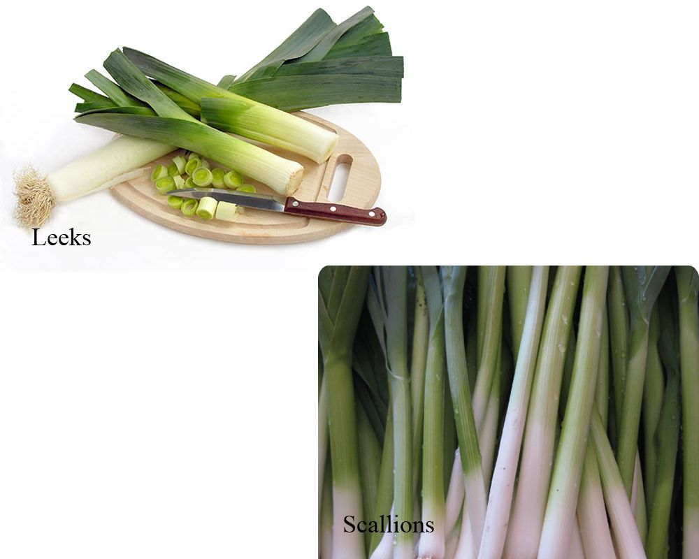 Pin On Leeks Vs Scallions