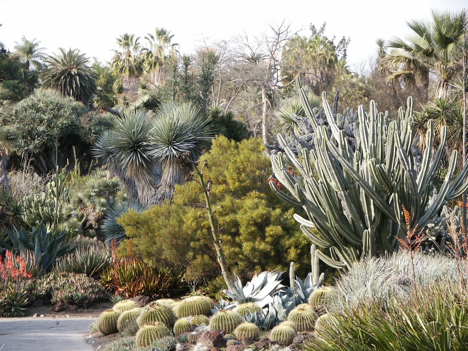 Huntington Desert Garden Cactus Home Garden Ideas