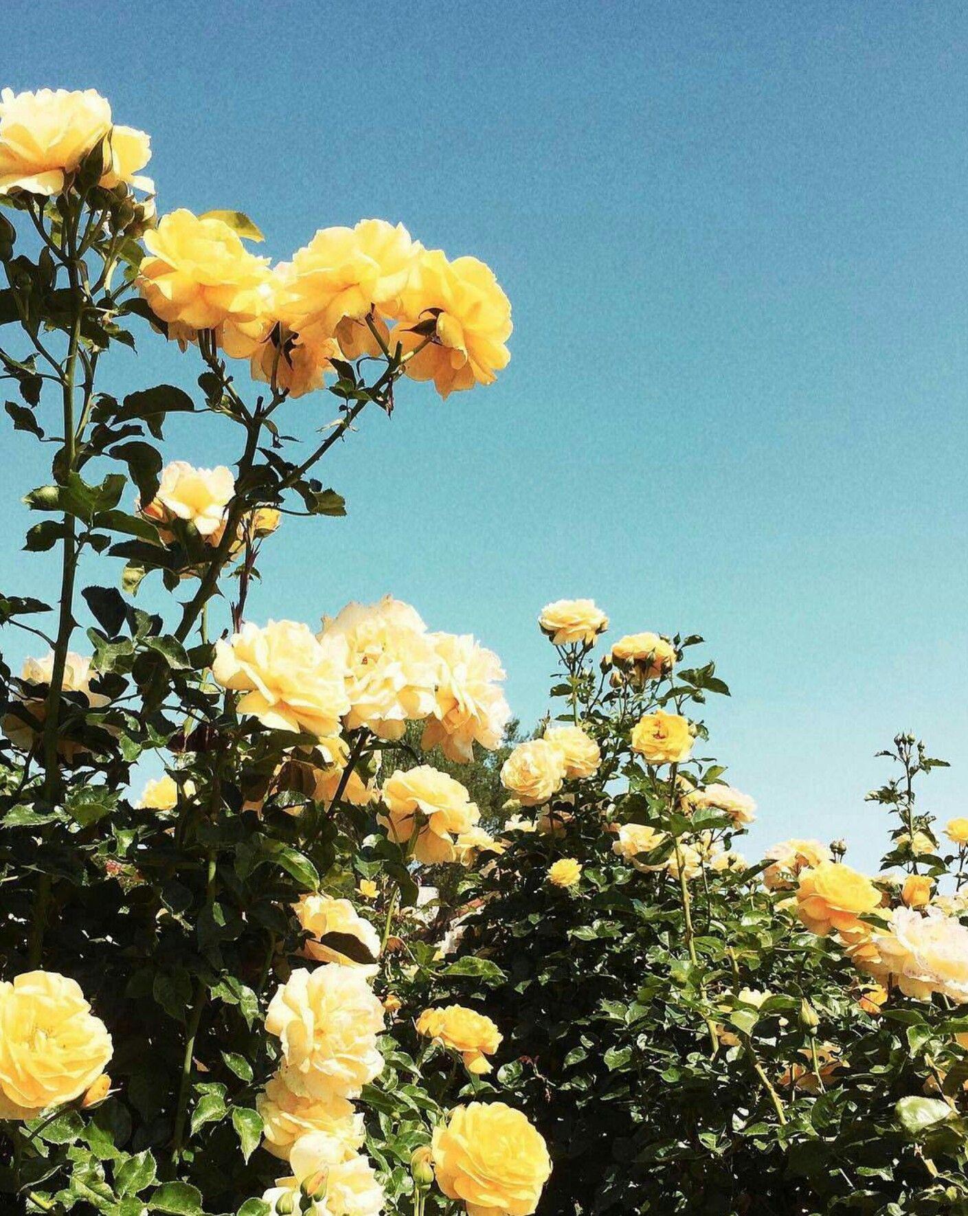 Pinterest Navneetbahra Yellow Flowers Flower Aesthetic
