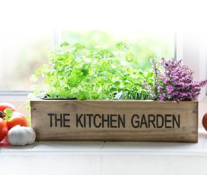 Plantas y hierbas para la cocina deco plantas - Plantas aromaticas interior ...