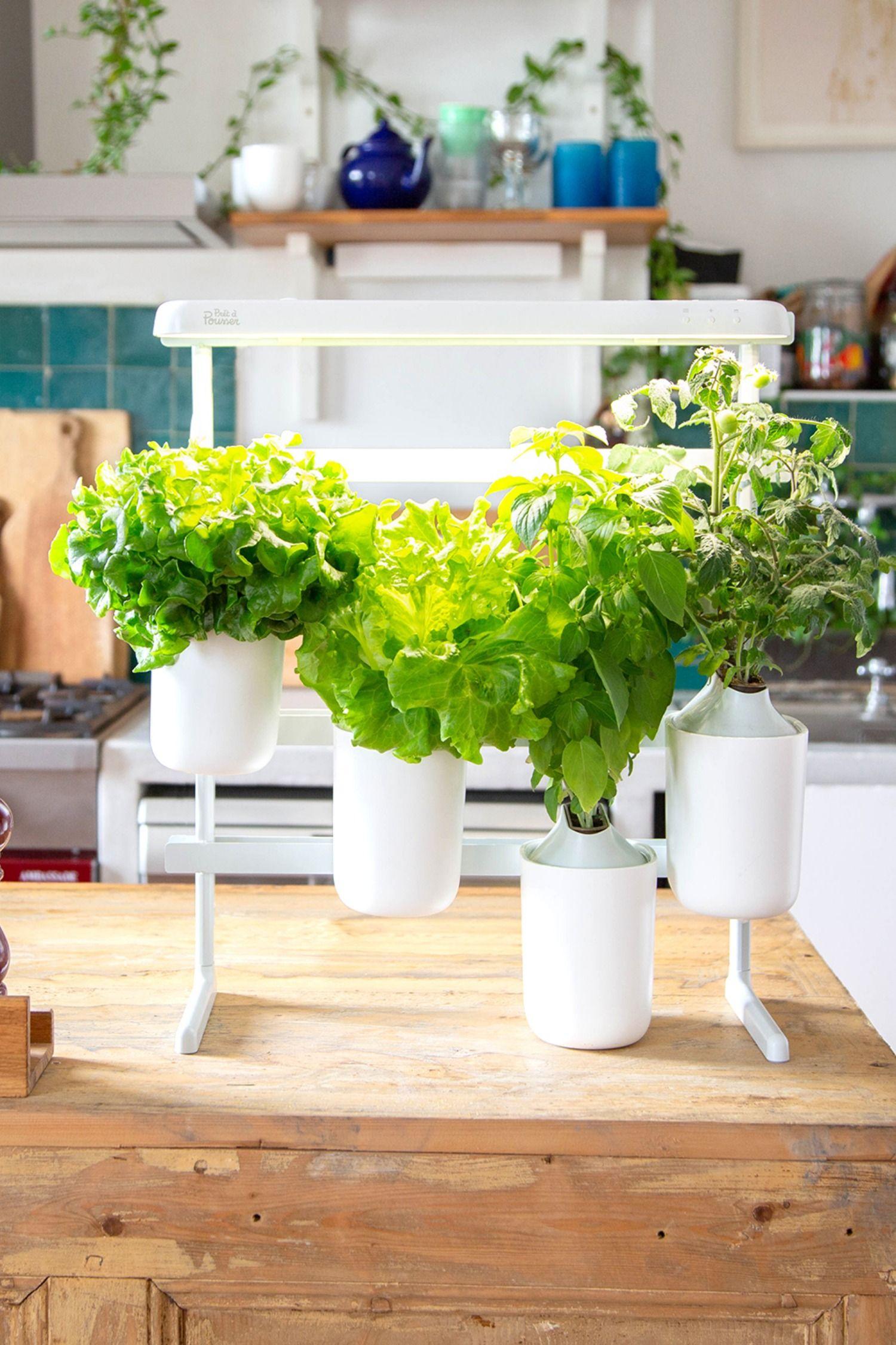Plante D Intérieur A Faire Pousser modulo | potager intérieur, potager, cultiver des herbes