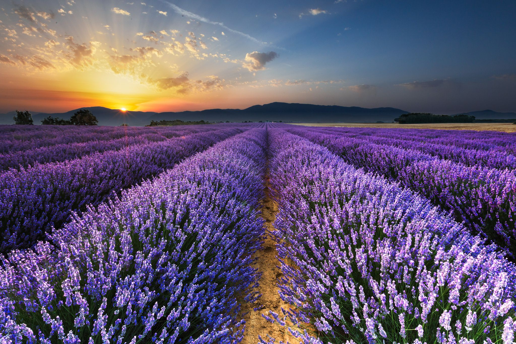 https://flic.kr/p/vqYYgD | Sunrise on the Lavender Fields in Valensole in Provence | My Website - My Flickr - My Facebook -  My Google+ - My 500px - My Pinterest