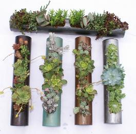 Vertical Garden Solutions Creating Green Vertical Walls
