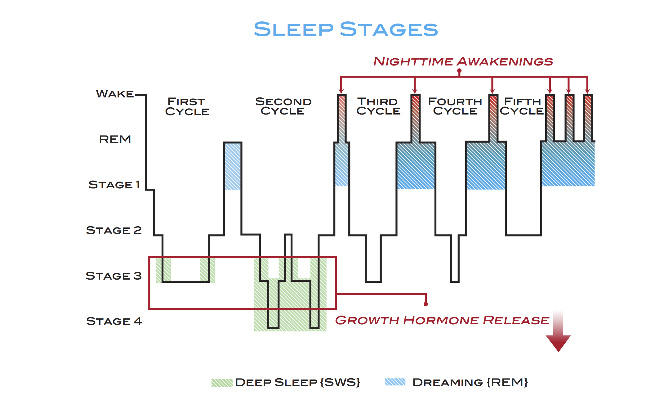 Sleep cycle chart normal google search insomnia pinterest