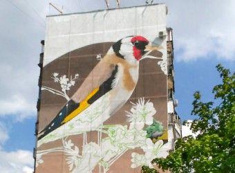 Харьковские стены домов украсят гигантские рисунки птиц. Гигантскую картину щегла, одной из самых распространенных птиц Харькова, уже нарисовали на фасаде дома по ул. Библика, 1-б. Изобразили огромную птицу художники творческой группы «Кайлас-В»