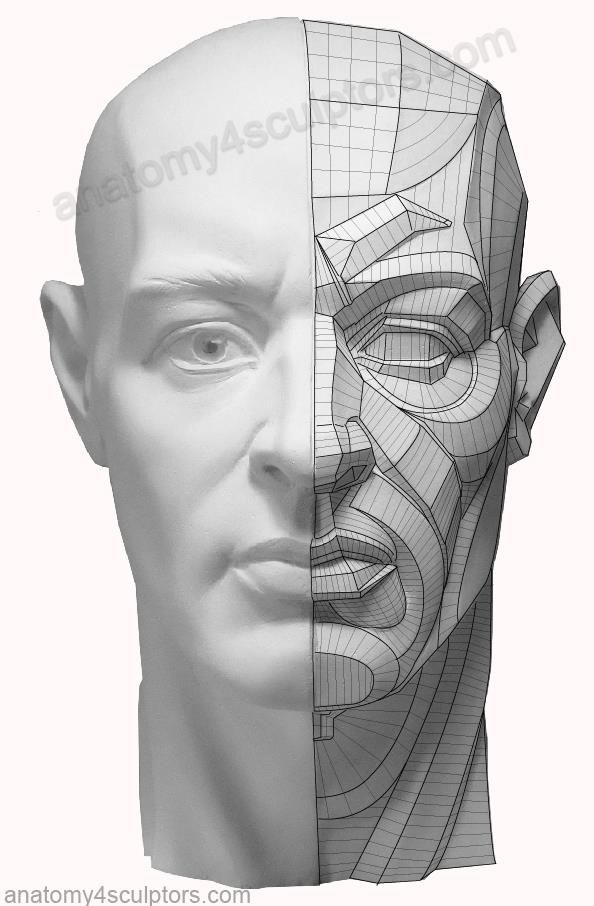 Pin by Renaud Galand on Anatomy - M/F - Head features | Pinterest ...