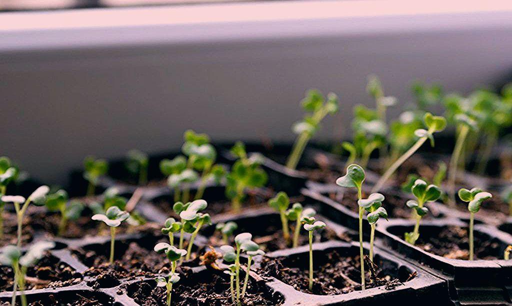 Photo of Gartenarbeit im Februar: Ihre monatliche Übersicht