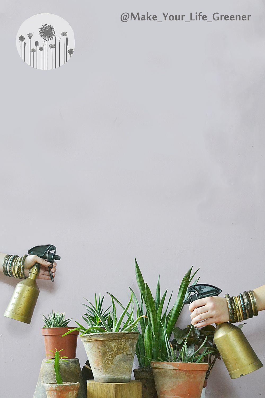 Rosliny Pochlaniajace Wilgoc Z Powietrza Plants Garden Green
