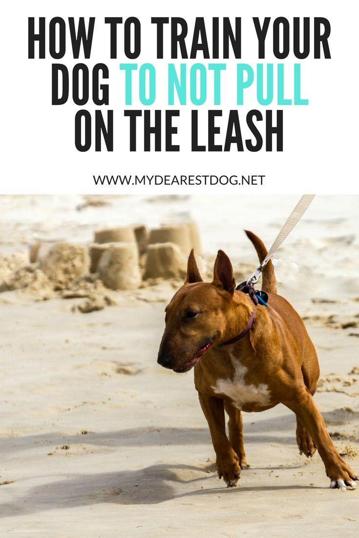 Leash walking a dog how to train your dog to not pull on