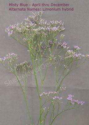 These Look Like Purple Baby S Breath Types Of Flowers Purple Flowers Flowers