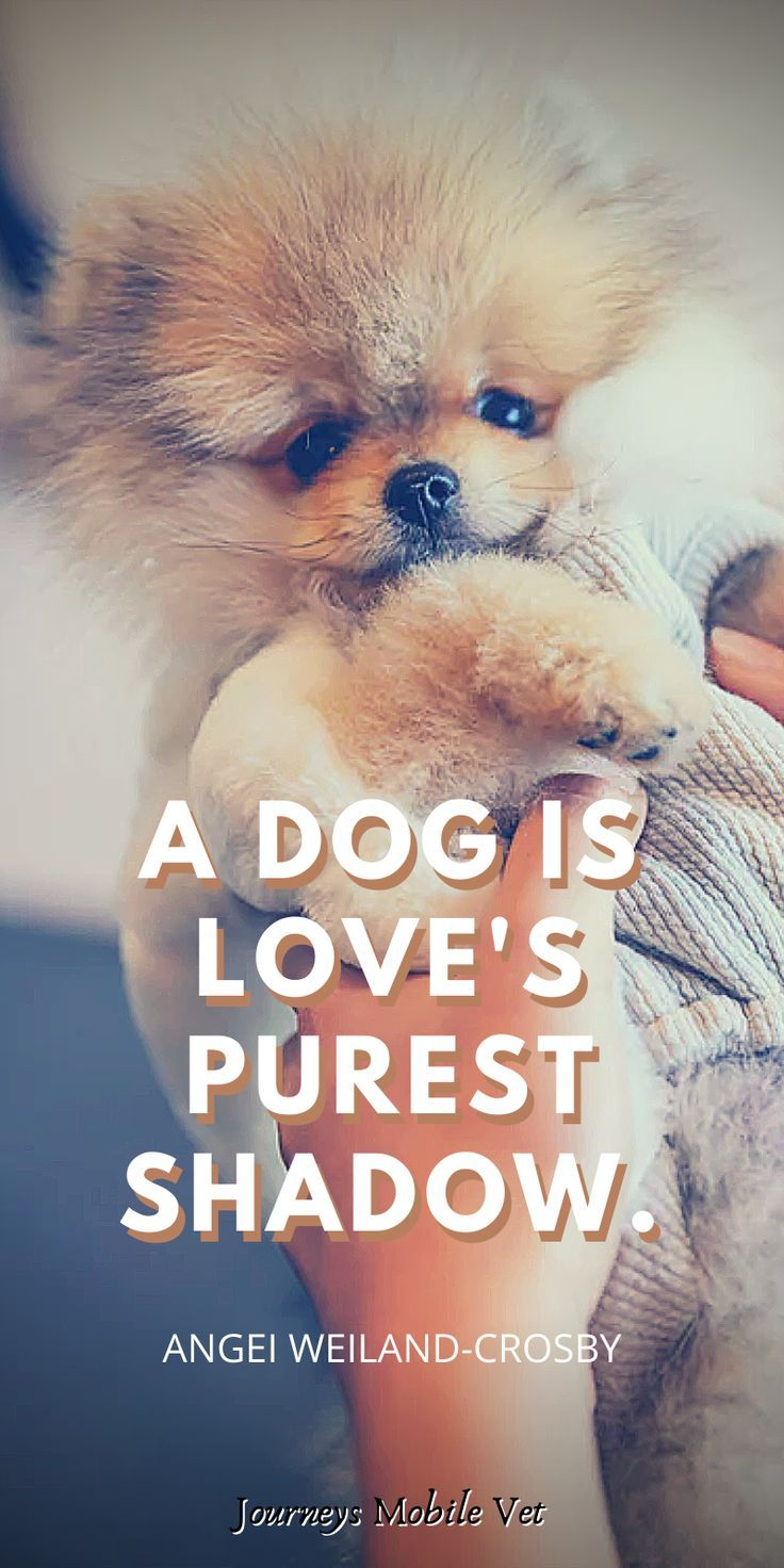 This is the best dog quote. Simple and true! It needs to be on the dog quotes sweet list #dog #dogs #puppy #instadog #doglover #love #pet #dogoftheday #cute #doglovers #doglife #pets #puppylove #of #doggo #puppies #ilovemydog #cat #dogsofinsta #animals #hund #doggy #doglove #bhfyp