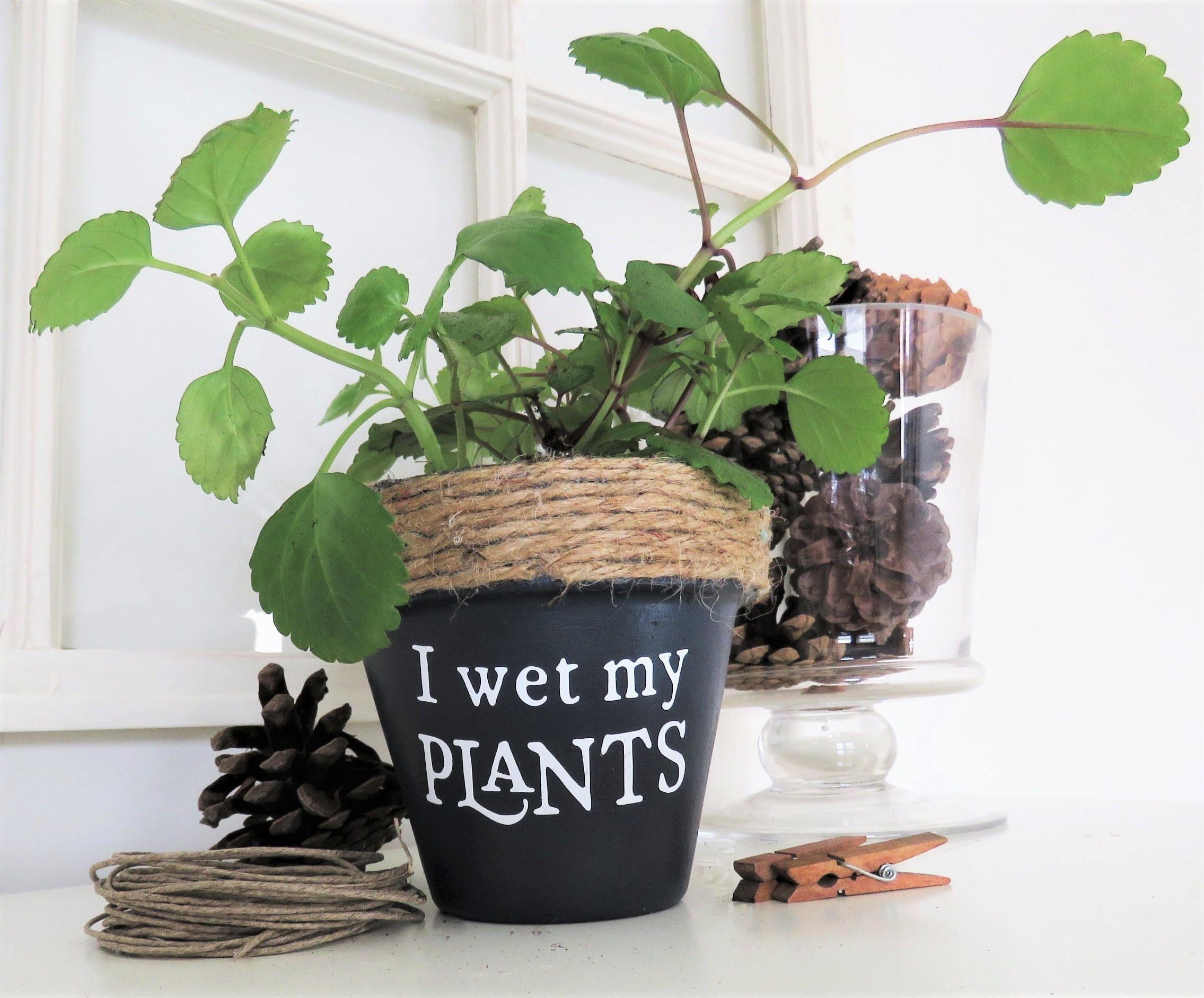 Funny Plant Pot I Wet My Plants Funny Plant Pun Potter Succulent Planter Indoor Planter Cactus Pot Plant Pun Funny Plant Puns Plants Painted Flower Pots