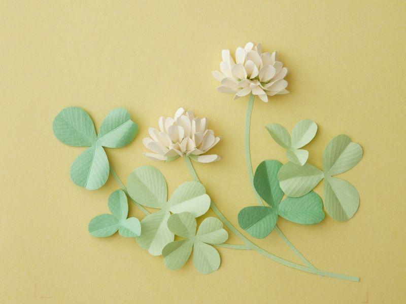 やまもとえみこ 野の花の立体切り紙 マーメイド、タント、里紙|あの紙 - schöne schlafzimmer farben