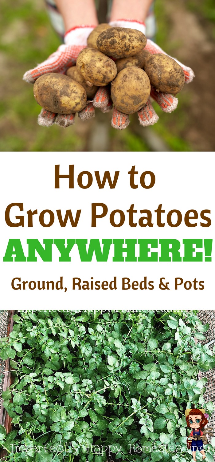How To Grow Potatoes Anywhere Growing Vegetables Planting
